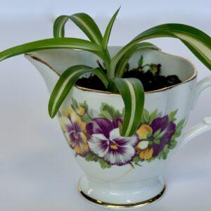 mini spider plant in fine china creamer